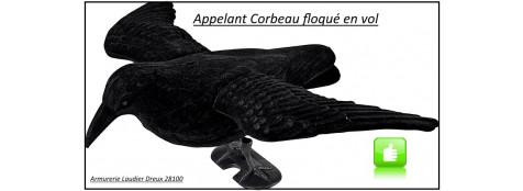 Appelant-Corbeau-floqué en vol- ref19503