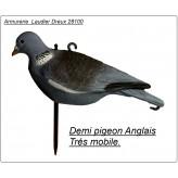 Appelant pigeon Anglais Demie palombe-Ref 19911